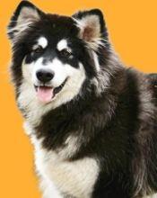 已认证大型犬展区
