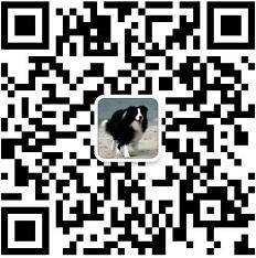 丽江卖边牧丽江买边牧丽江狗场常年出售纯种边牧微信二维码