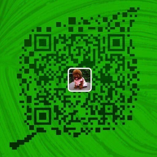 攀枝花宠物网买狗市场名犬基地买马犬的地方微信二维码