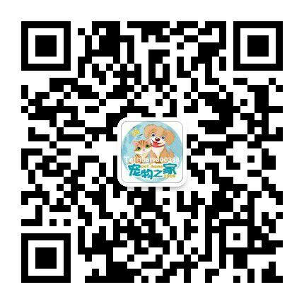 纯种藏獒幼犬红色铁包金 狮头藏獒产地货源零售报价微信二维码