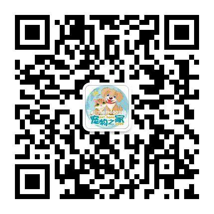 2021网红贵宾犬小狗抖音快手贵宾幼犬短视频推荐微信二维码